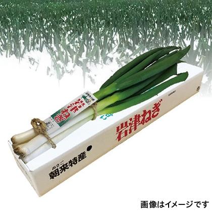日本三大ねぎ岩津ねぎ 1箱