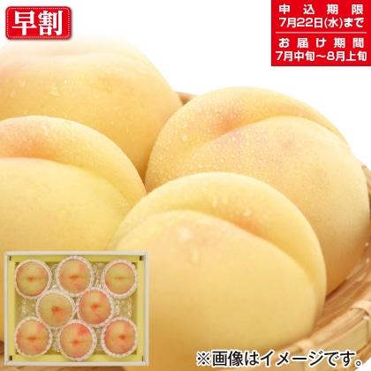 岡山の白桃 B