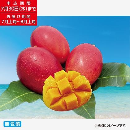 沖縄 燦々マンゴー 1kg
