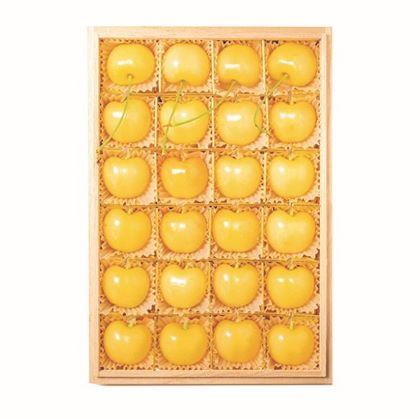 黄色いさくらんぼ月山錦
