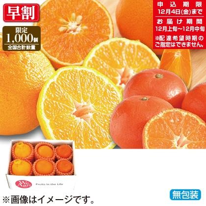 冬のフルーツ柑橘3種セット