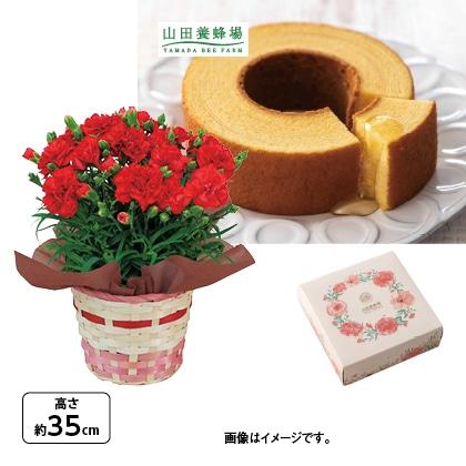 <※母の日対象商品>カーネーション(赤)&山田養蜂場はちみつバウム