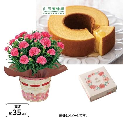 <※母の日対象商品>カーネーション(ピンク)&山田養蜂場はちみつバウム