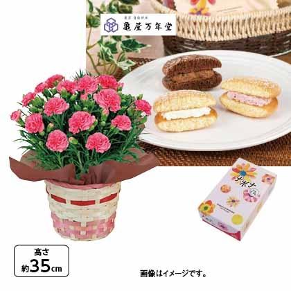 <※母の日対象商品>カーネーション(ピンク)&ナボナロングライフ