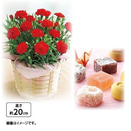 一口京菓子「きれいどころ」とカーネーション鉢