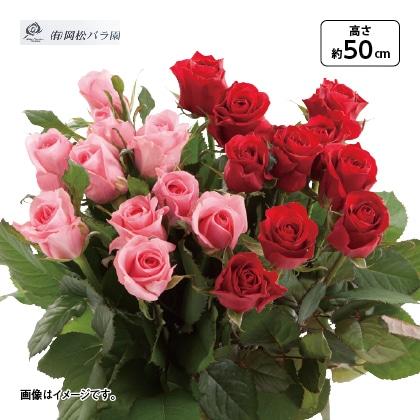バラの花束 ロングサイズ
