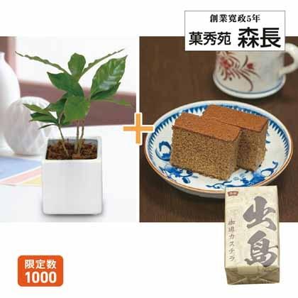コーヒーの木&珈琲カステラ
