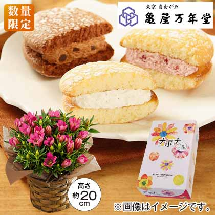 りんどう(ピンク)&ナボナセット