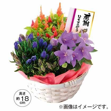 秋の3種花かご