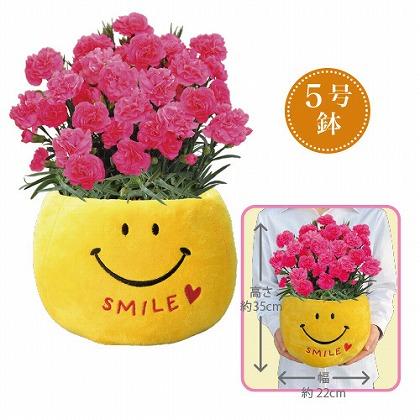 【母の日】ピンクカーネーション5号鉢「スマイル」