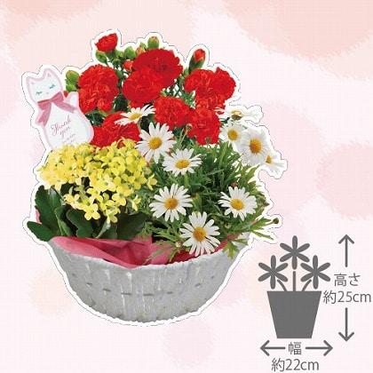 【母の日】春の寄せカゴ
