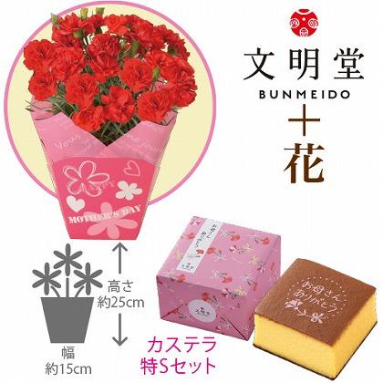 【母の日】赤カーネーション4号鉢と文明堂カステラ特S