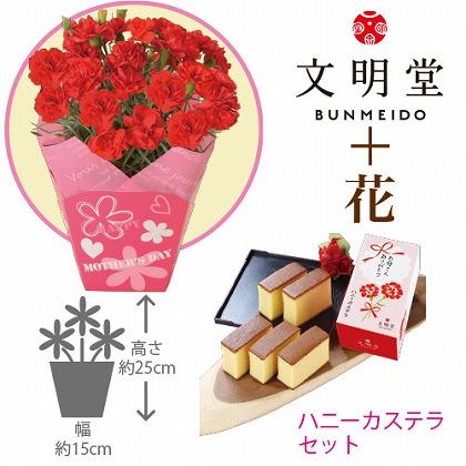 【母の日】赤カーネーション4号鉢と文明堂ハニーカステラ