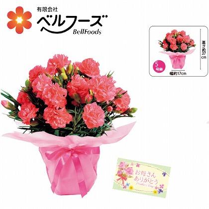 """【母の日】カーネーション""""しあわせ""""〜ピンク"""