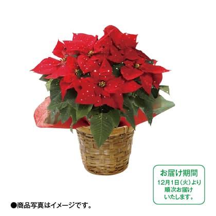 ポインセチア(レッド)鉢植えラメ付き