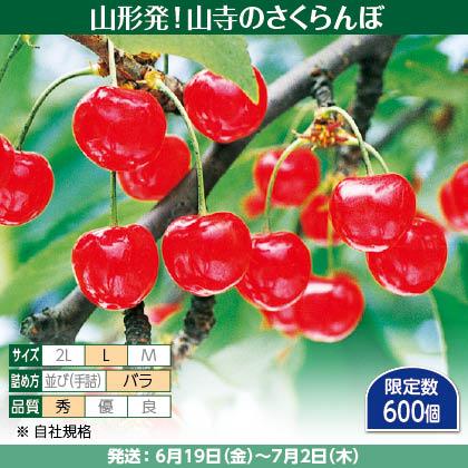 佐藤錦(22)500g(L、秀:バラ詰)、保冷剤入