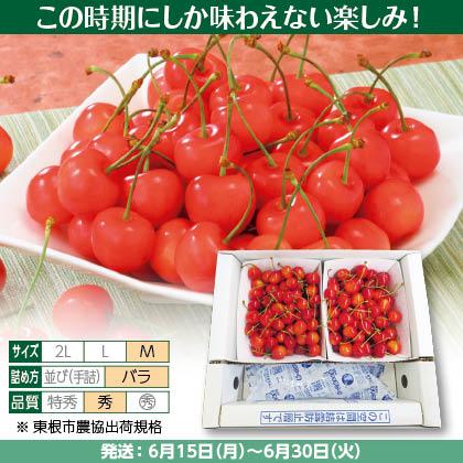 佐藤錦(31)500g(M、秀:バラ詰)×2、保冷剤入