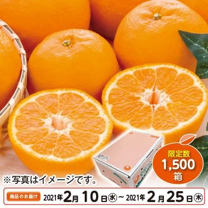 愛媛県産ポンカン