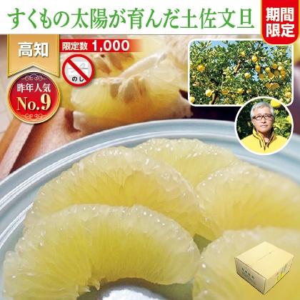 土佐文旦3.5kg(家庭用)