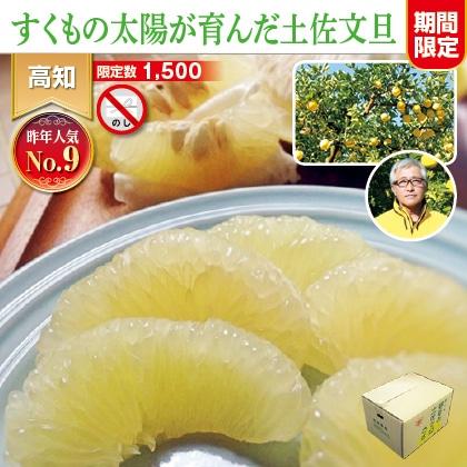 土佐文旦4.5kg(家庭用)