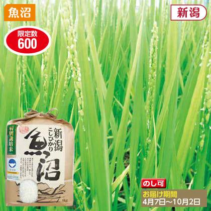 魚沼コシヒカリ特別栽培米 5kg(2019年産)