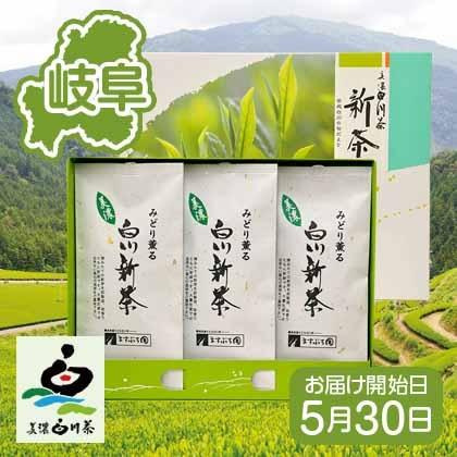 白川新茶B