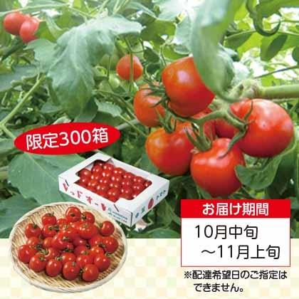 レッドオーレ トマト