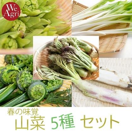【お買い得】春の味覚 山菜5種セット