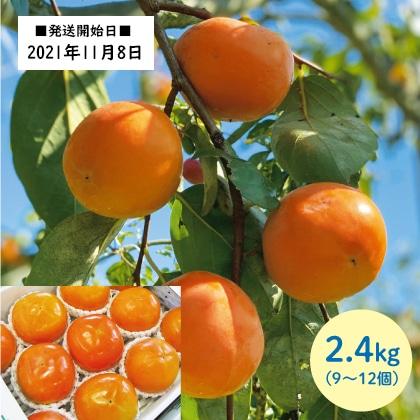 富有柿 2.4kg