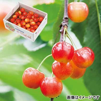 【期間限定商品】紅秀峰 2L 秀品 手並べ