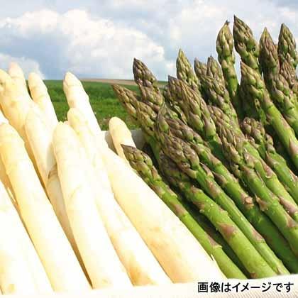 【期間限定商品】グリーン&ホワイト各500g(M〜2L)