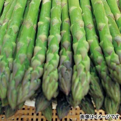 【期間限定商品】グリーンアスパラ900g L