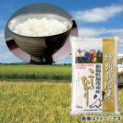 特別栽培米コシヒカリ 白米