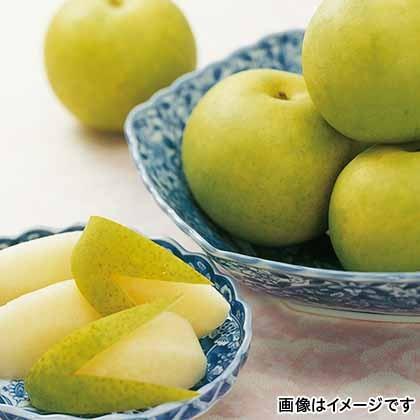 【期間限定商品】鳥取の二十世紀梨 3kg