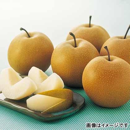 【期間限定商品】鳥取の梨(豊水)