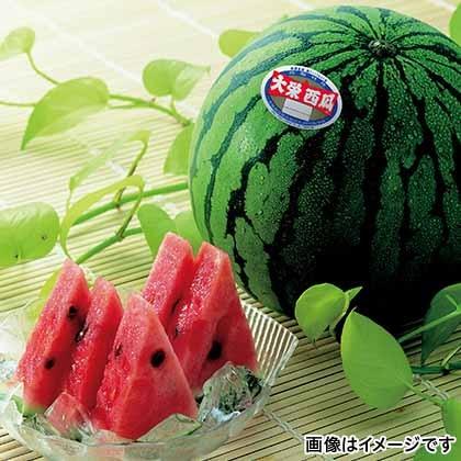 【期間限定商品】大栄スイカ 14kg