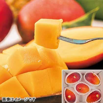 【期間限定商品】沖縄完熟マンゴー 1.5kg