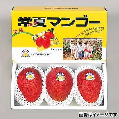 【期間限定商品】常夏マンゴー 1.2kg