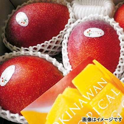 【期間限定商品】沖縄マンゴー 1kg