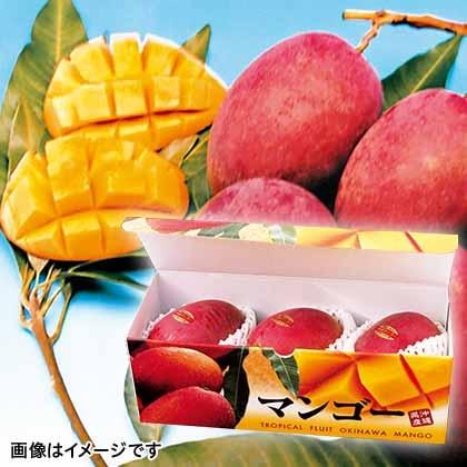 【期間限定商品】贈答用マンゴー B