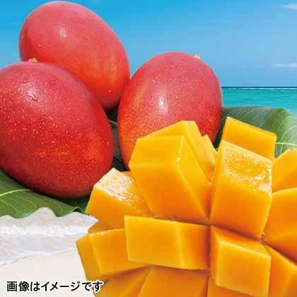 【期間限定商品】沖縄燦々マンゴー 1kg