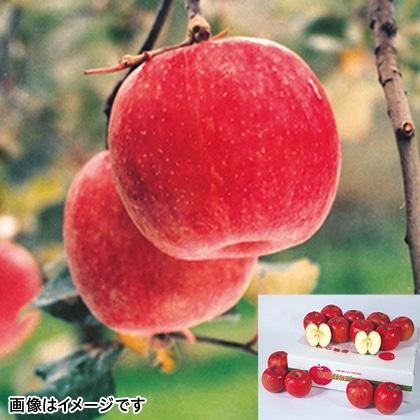 【期間限定】 ふじりんご