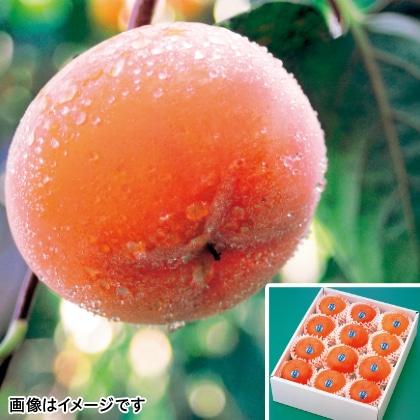 【期間限定】 會津の柿「吉美人」 12個