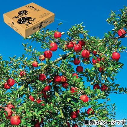 【期間限定】 信州りんご サンふじ ご家庭用 5kg
