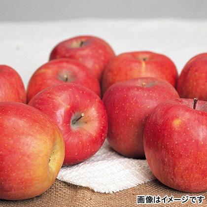 【期間限定】 サンふじ 3kg(L)