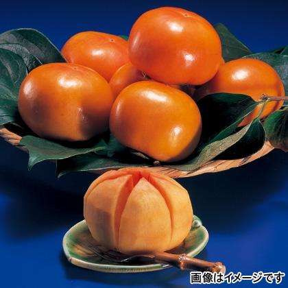 【期間限定】 富有柿 Lサイズ