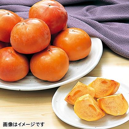 【期間限定】 富有柿 L