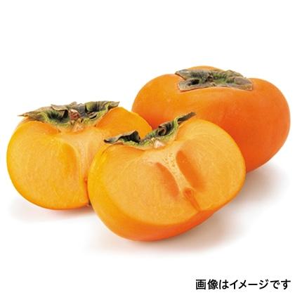 【期間限定】 富有柿 ご家庭用