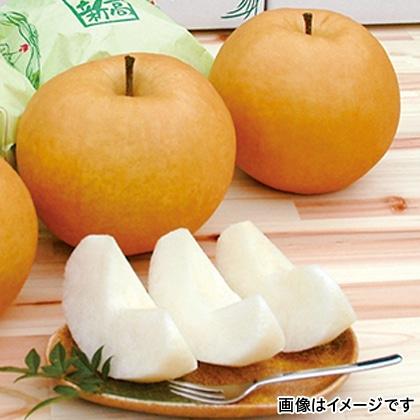 【期間限定】 新高梨 2.4kg