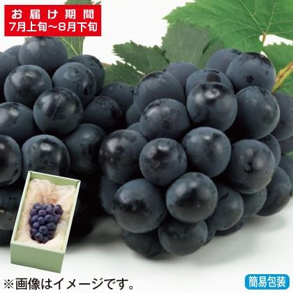 <※お中元対象商品>岡山県産種なしピオーネ 500g